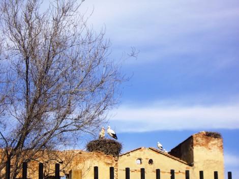 Las cigüeñas te  reciben en una escapada de libro, la ciudad natal de Cervantes