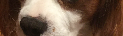 Plan perro cuatroabordo